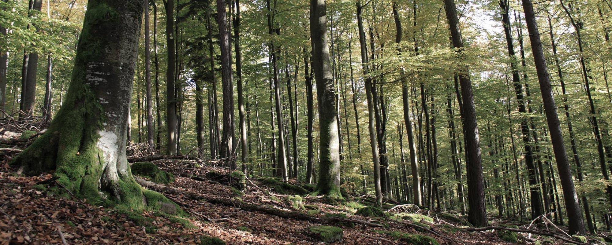 Holz aus Spessart und Steigerwald